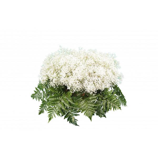 корзина из живых цветов КРЖ-01